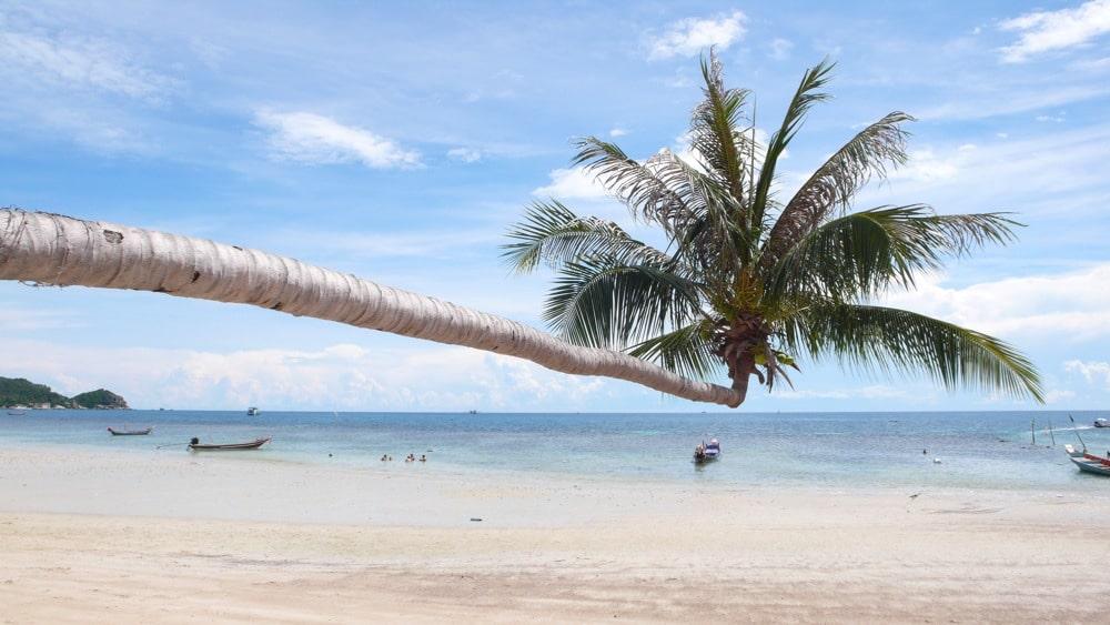 Die finanzielle Freiehut unter Palmen